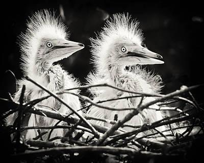 Photograph - Fl Peeps by Patrick M Lynch