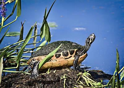 Polaroid Camera - FL Turtle by Patrick Lynch