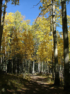 Photograph - Flagstaff Aspens 802 by Mary Dove
