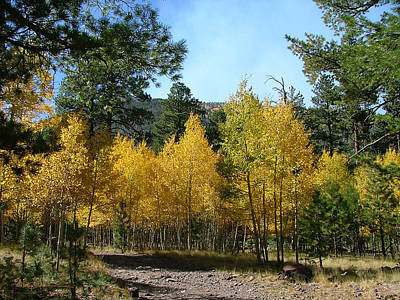 Photograph - Flagstaff Aspens 804 by Mary Dove