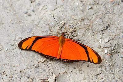 Flambeau Butterfly Art Print by James Brunker