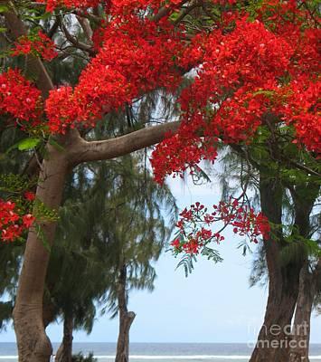 Flamboyant - Ile De La Reunion - Reunion Island Art Print by Francoise Leandre