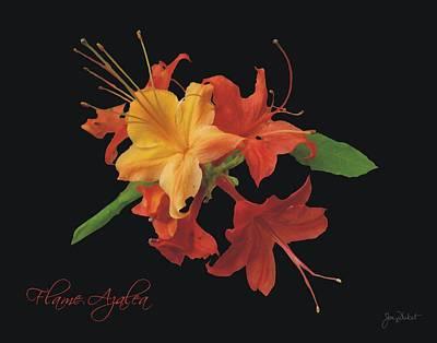 Photograph - Flame Azalea  by Joe Duket