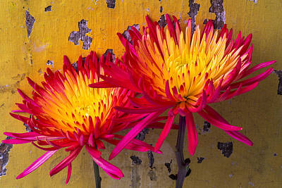 Chrysanthemums Photograph - Flame Mums Against Yellow Wall by Garry Gay