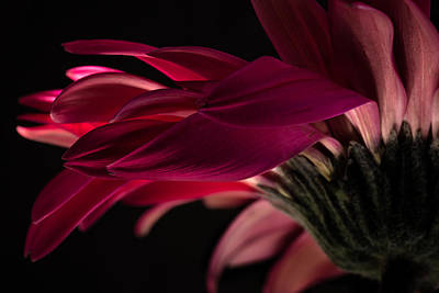 Photograph - Flame Of Love by Edgar Laureano