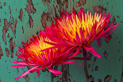 Chrysanthemums Photograph - Flame Spider Mums by Garry Gay