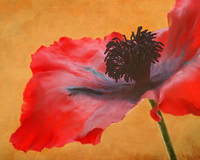 Painting - Flamenco by Kasandra Sproson