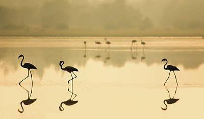 Flamingos Photograph - Flamencos by Martin Zalba