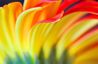 Photograph - Flames by Joan Herwig