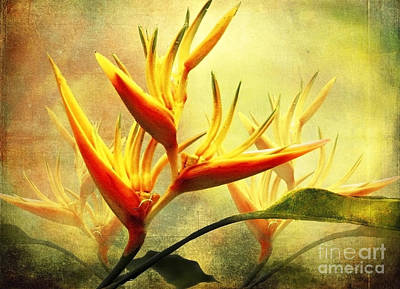 Photograph - Flames Of Paradise by Ellen Cotton