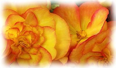 Photograph - Flaming Begonias-mackinac Island by Liz Evensen
