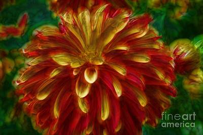 Photograph - Flaming Dahlia by Shirley Mangini