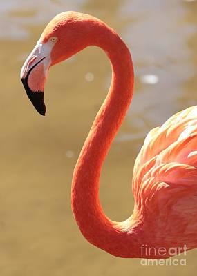 Flaming Flamingo Art Print by Carol Groenen