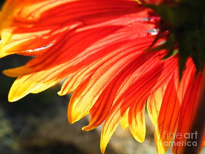 Photograph - Flaming Florality  by Brian Boyle
