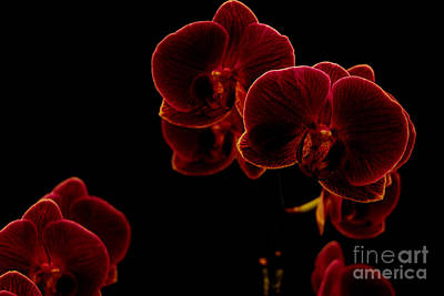 Wall Art - Photograph - Flaming Orchids by Christine Mlynarchuk