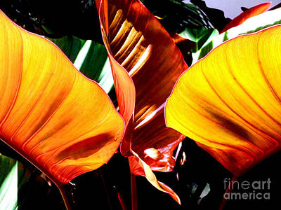 Art Print featuring the photograph Flaming Plant by Kristine Merc