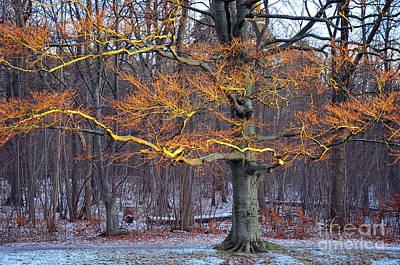 Photograph - Flaming Tree by Randi Grace Nilsberg