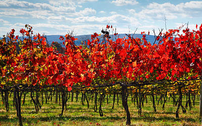 Flaming Vineyard Art Print by Steven Ainsworth