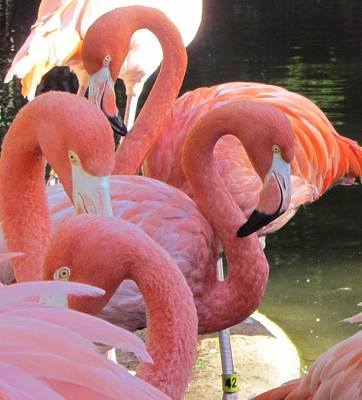 Flamingo Photograph - Flamingo 5 by Cathy Lindsey
