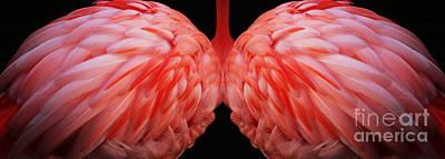 Photograph - Flamingo Angel by Lisa Cockrell