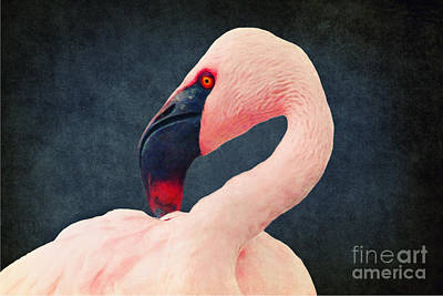 Flamingo Art Print by Angela Doelling AD DESIGN Photo and PhotoArt