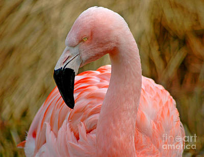 Art Print featuring the photograph Flamingo Art by Nick  Boren