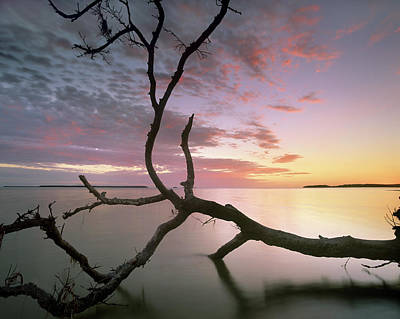 Flamingo Bay, Everglades National Park Art Print