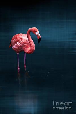 Flamingo - Blue Print by Hannes Cmarits
