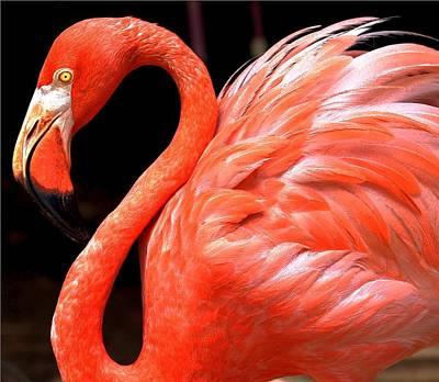 Digital Art - Flamingo by Carrie OBrien Sibley