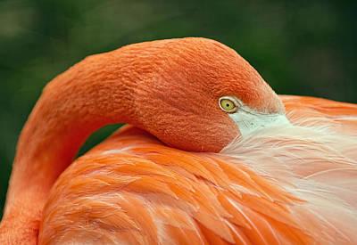 Art Print featuring the photograph Flamingo Closeup by RC Pics