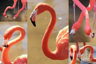 Photograph - Flamingo Collage by Carol Groenen