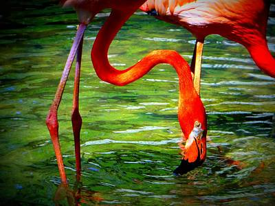 Photograph - Flamingo by David Mckinney