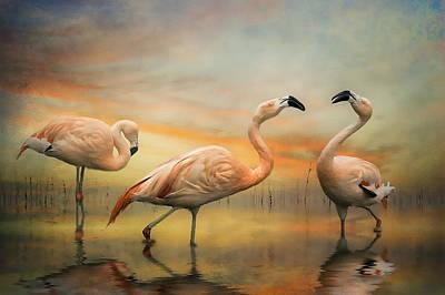 Flamingo Dusk Art Print