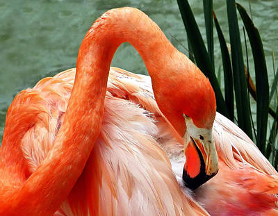 Photograph - Flamingo Elegance by Wayne Wood