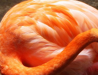 Flamingo Feathers Print by Beth Vincent