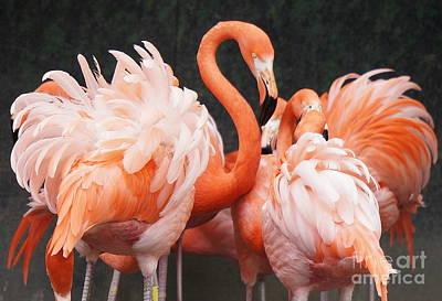 Photograph - Flamingo Flock  by Rachel Munoz Striggow