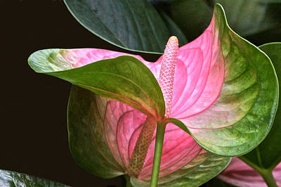 Flamingo Flower Art Print