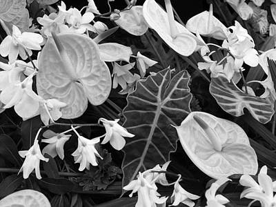 Photograph - Flamingo Flowers And Orchids Black And White by Gill Billington