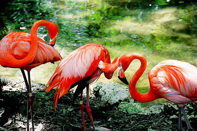 Photograph - Flamingo Friends by Beverly Stapleton