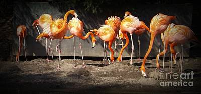 Flamingo Hangout Art Print