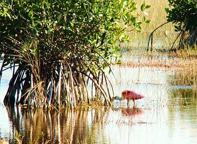 Photograph - Flamingo In The Mangroves by Van Ness