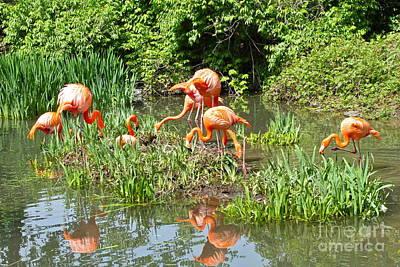Photograph - Flamingo Island by Rick  Monyahan
