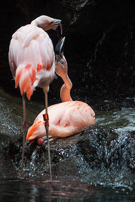 Art Print featuring the photograph Flamingo Love by Mike Lee
