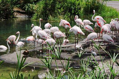Photograph - Flamingo by Masha Batkova