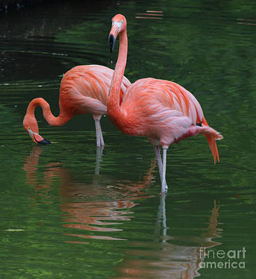 Photograph - Flamingo On Guard by Jackie Farnsworth