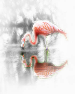 Photograph - Flamingo Reflection by Wayne Wood