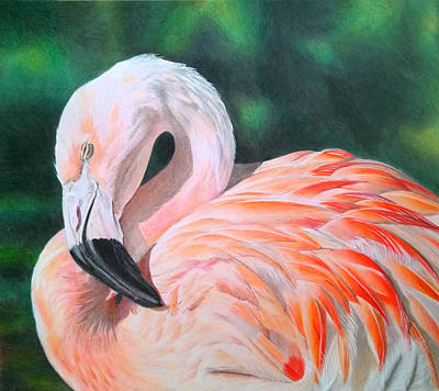 Flamingo Drawing - Flamingo by Obibi Art