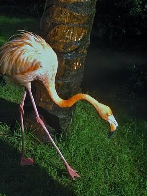 Flamingo Search Party Art Print