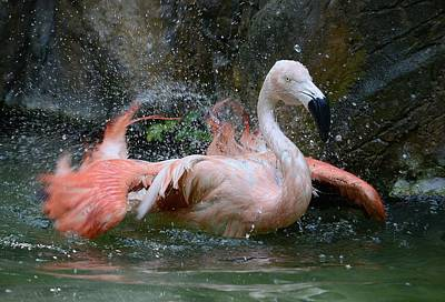 Photograph - Flamingo Shake by Fraida Gutovich