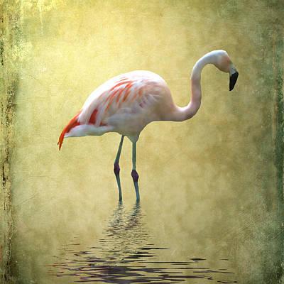 Flamingo Mixed Media - Flamingo by Sharon Lisa Clarke